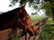 В Крыму лошадь откусила девочке палец