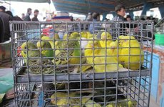 В Госдуме призвали запретить продажу животных в зоомагазинах