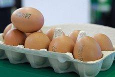 ФАС проверит рост цен на яйца и мясо