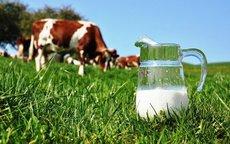 В Роспотребнадзоре предупредили о риске заразиться энцефалитом через молоко