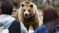 Медведь загрыз туриста в Красноярском крае