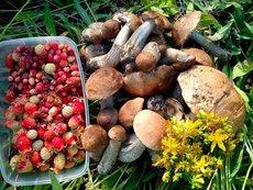 Минприроды РФ заявило об отсутствии запрета на сбор грибов и ягод