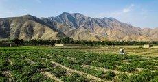 Глава британского Миноброны рассказал про Афганистан и