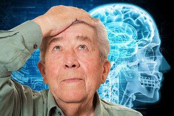 Грибы помогают пожилым людям улучшить память