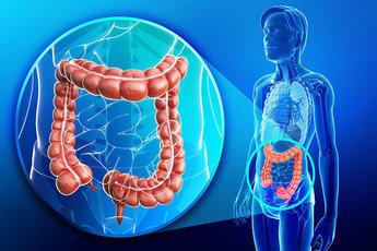 Настроение зависит от работы кишечника и другие малоизвестные факты о кишечнике