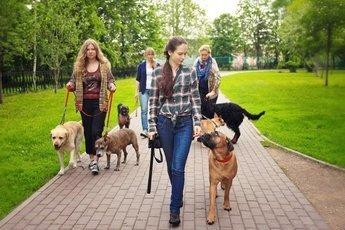Владельцы собак в четыре раза активнее